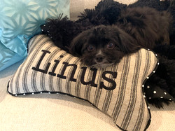 The pillow is bigger than the dog.