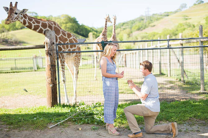 Christian + Lauren Surprise Proposal | Safari West | Kaitlynn Tucker Photography