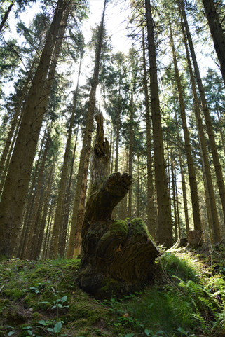 Waldwesen.jpg