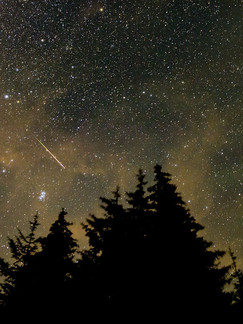 Gravenhurst, ON: Everything You Need To Know To Watch The Perseid Meteor Shower With Your Dog