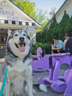 Ancaster, ON: Try Unique Ice Cream Flavours On Purple Rocking Horses With Your Dog
