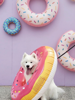 Mississauga, ON: Walk Your Puppies Through A Real Life Candyland