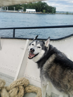 Toronto, ON: Set Sail On A Dog-Friendly 3-Masted Schooner With A Cannon Around The Harbour