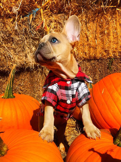 Hampton, ON: Spend The Night Before Halloween At This Dog-Festival With Corn Mazes & Wagon Rides
