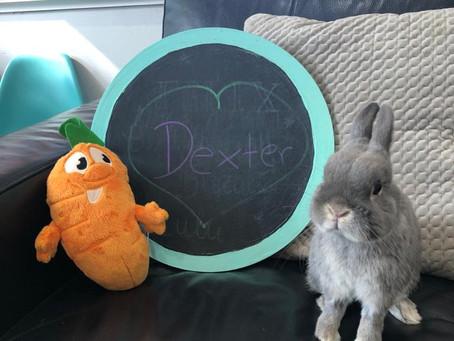 Do Rabbits Need a Vaccination?