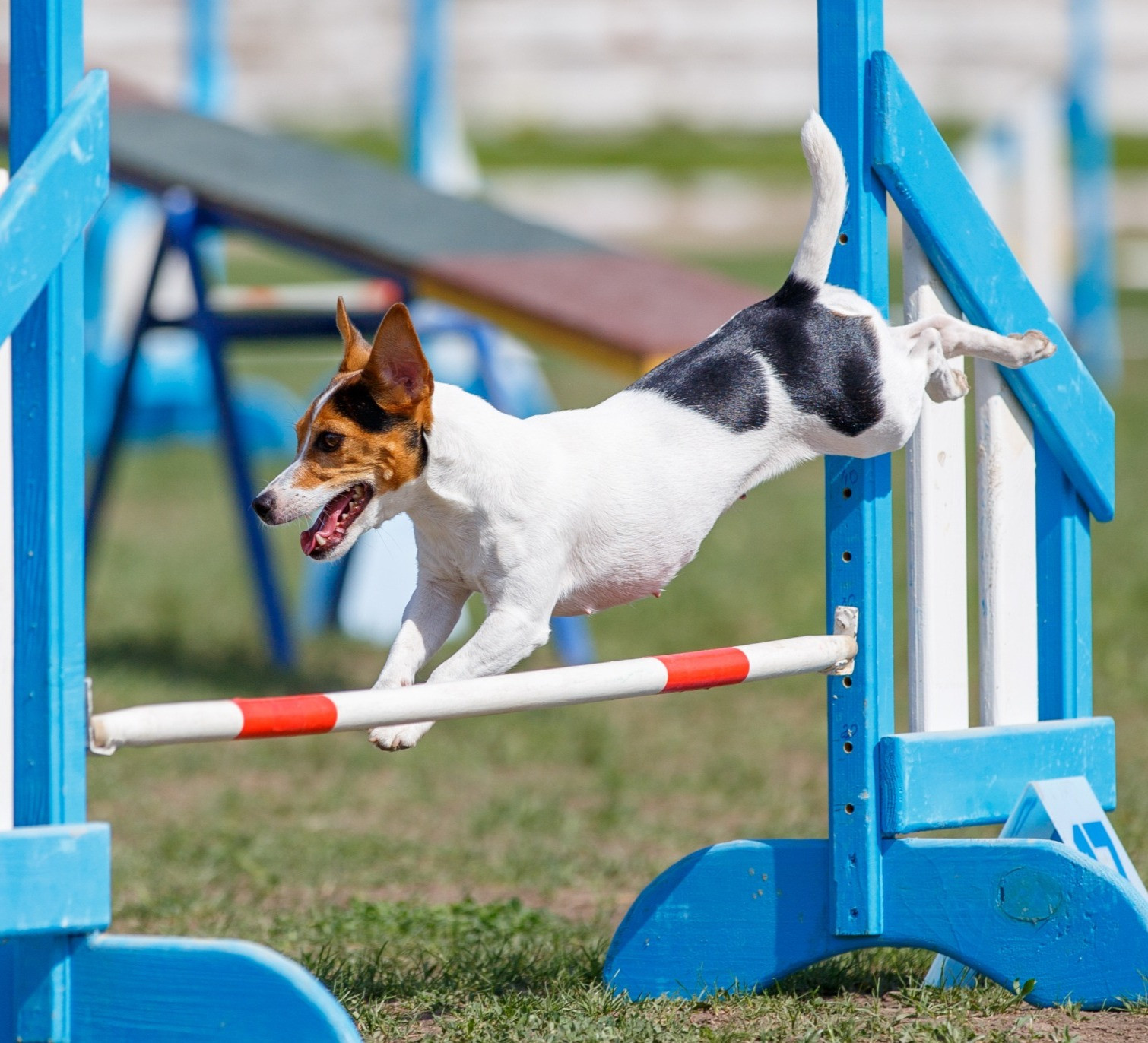 Canine Agility Park - Private Hire