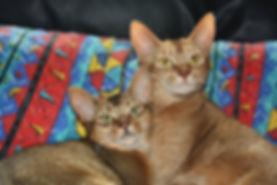 Anni and Coco.jpg