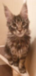 Rob kitten banner.jpg
