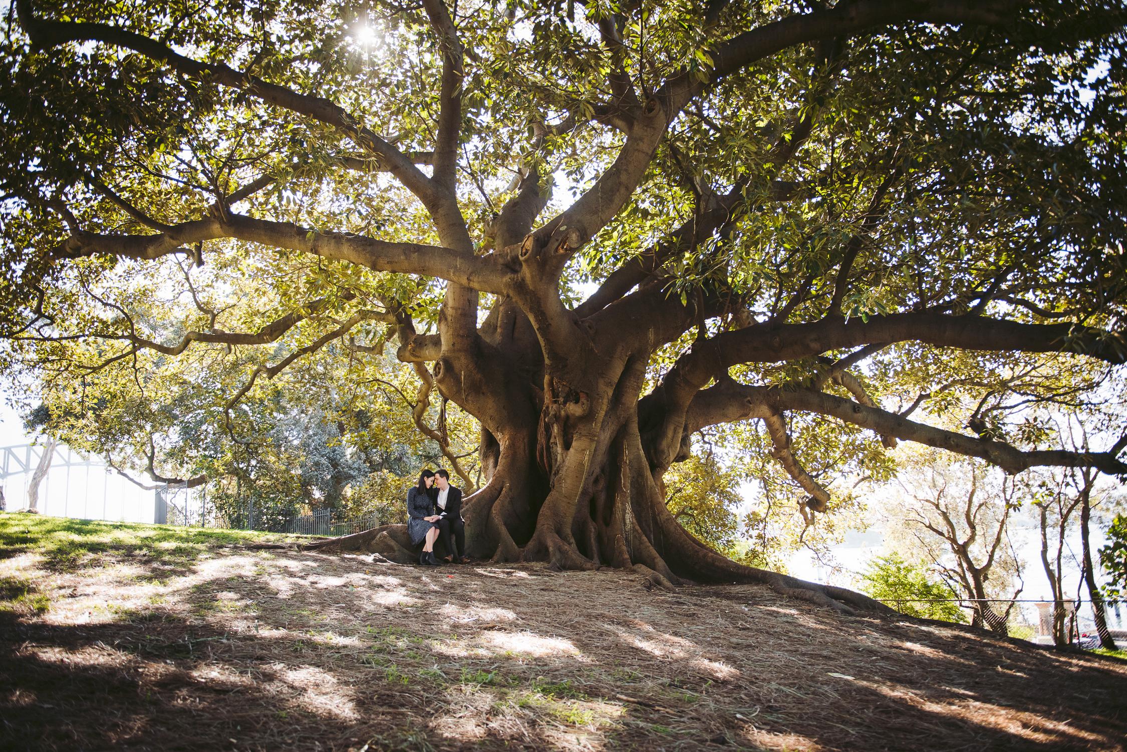 Engagement Photography, tree