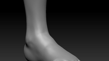 Female Anatomy Study (foot)