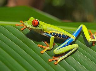 tree-frog-69813_1920.jpg