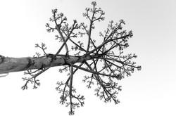 tree-2426568_1920