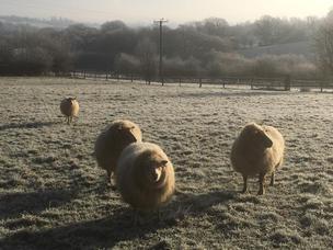 Wintry Fleece