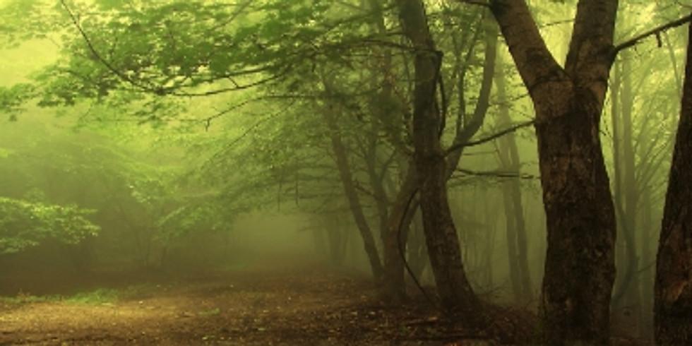 Curso e Vivência SP - Magia e Conexão com Árvores