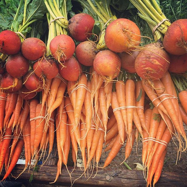 Carrots and golden beets. Such bounty he