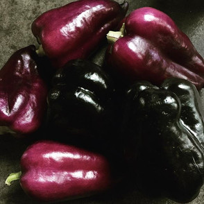 Black and purple pepper sheen.jpg