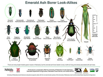 EAB-Look-Alikes-Chart-June2016_edited.jp