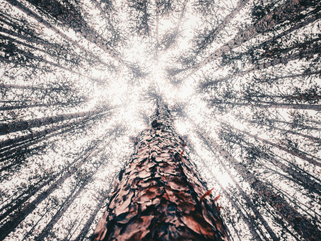 La luz está en los espacios vacíos