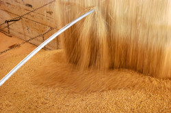 Grain & Agri Products