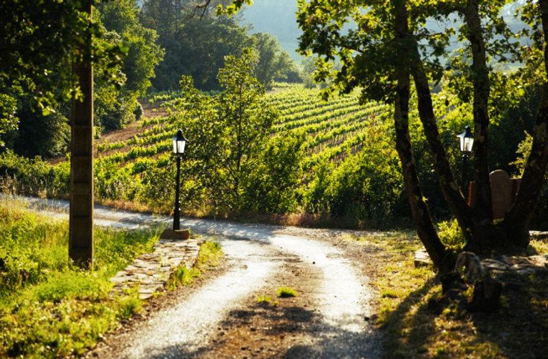 Bastide Avellanne_Vineyards.jpg