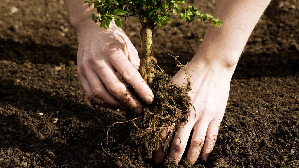 Baum-Aktion
