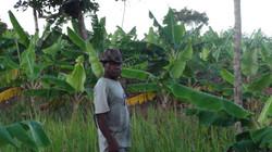 Der Stolz - die Bananenplantage
