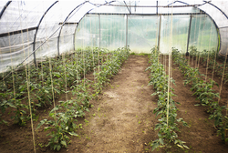 Gemüse aus dem Biogarten