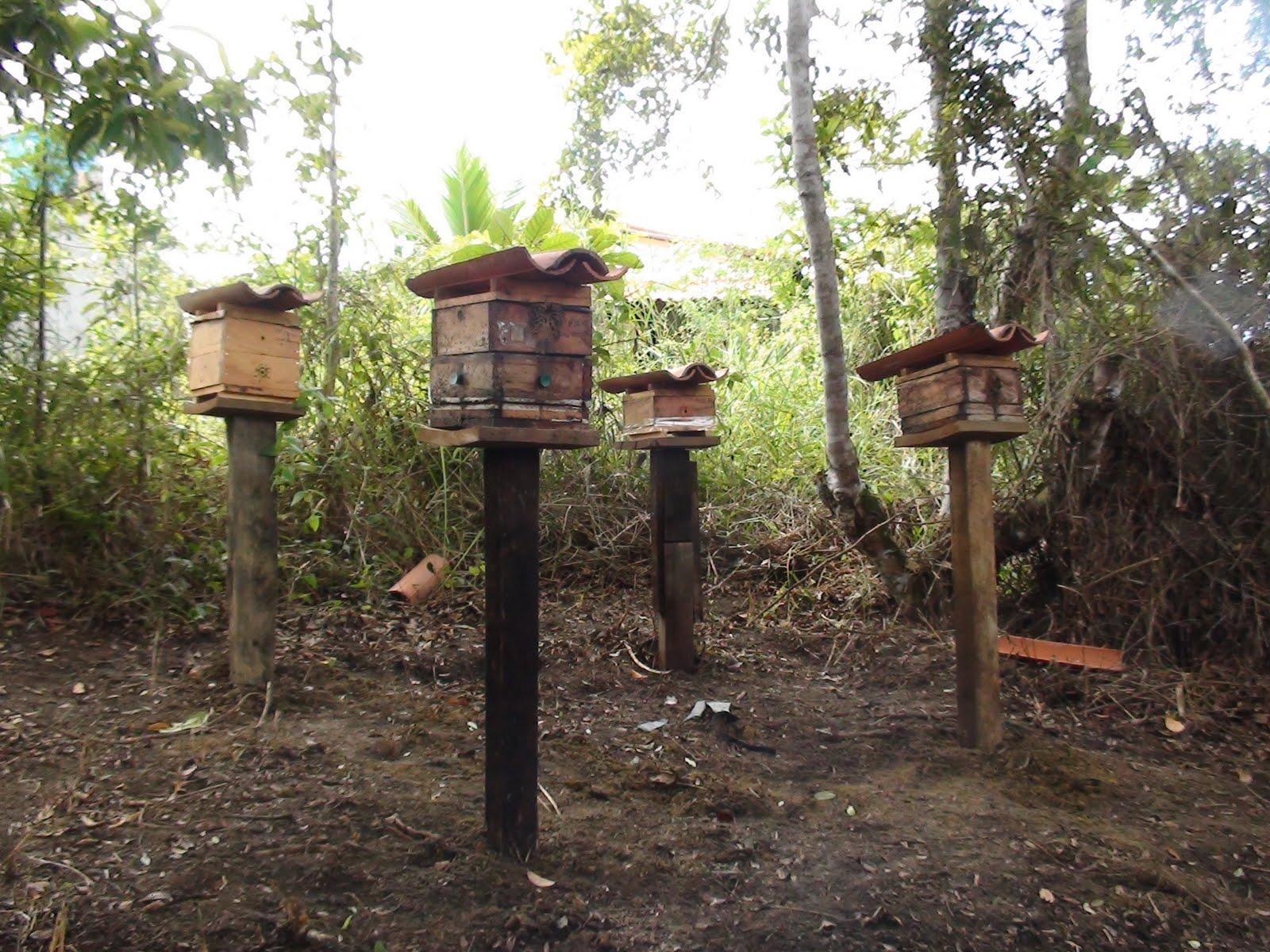 Bienenzucht Meliponini