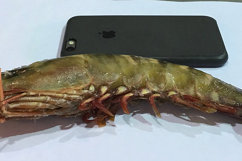 Head-on Shrimp, North Africa (multiple sizes available)