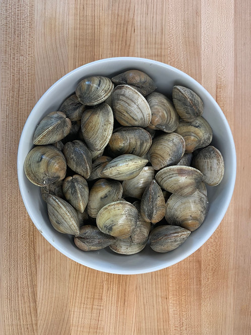Clams - Littleneck or Topneck