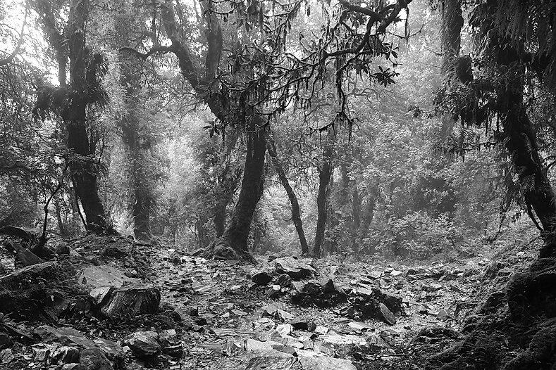 Charles Mercier Photographie