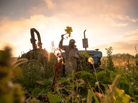 Farming in COVID-19, A Documentary