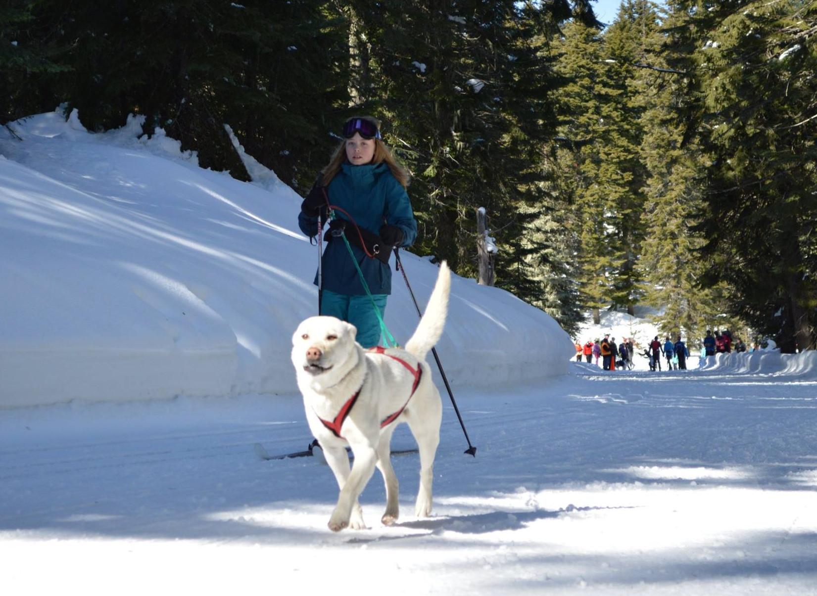 Skijor Clinic - Jan 2nd & 3rd
