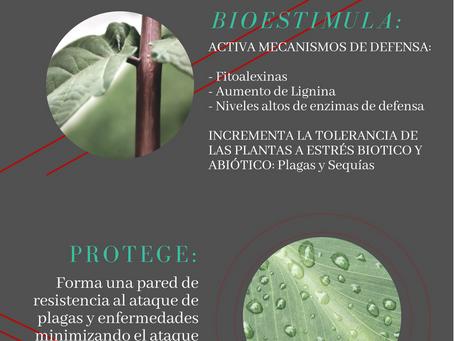 Conoce los principales beneficios de la tecnología Bioest: Si BPN