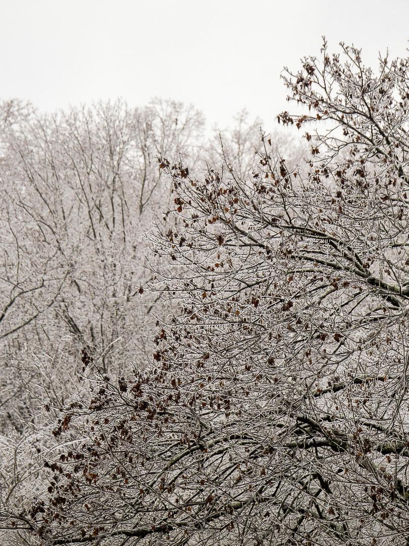 Ice tree 2.JPG
