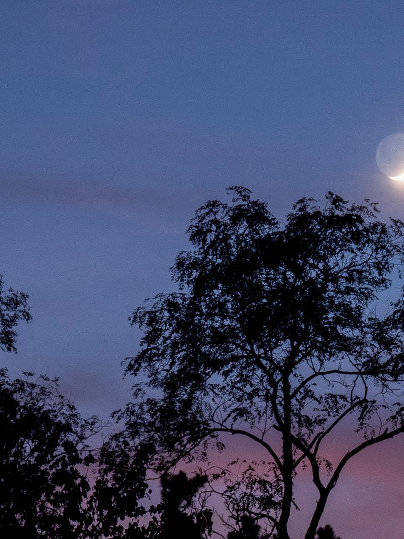 Moon for Denise.JPG