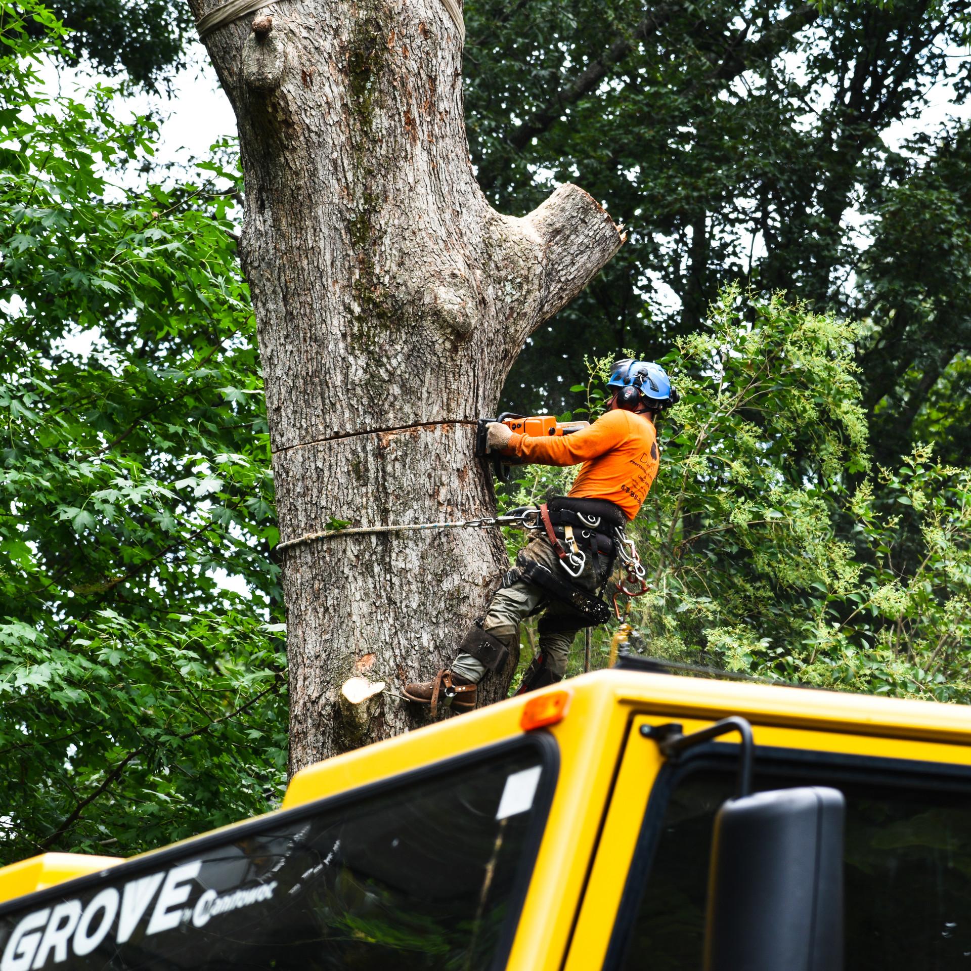 CRANE +TREE REMOVAL