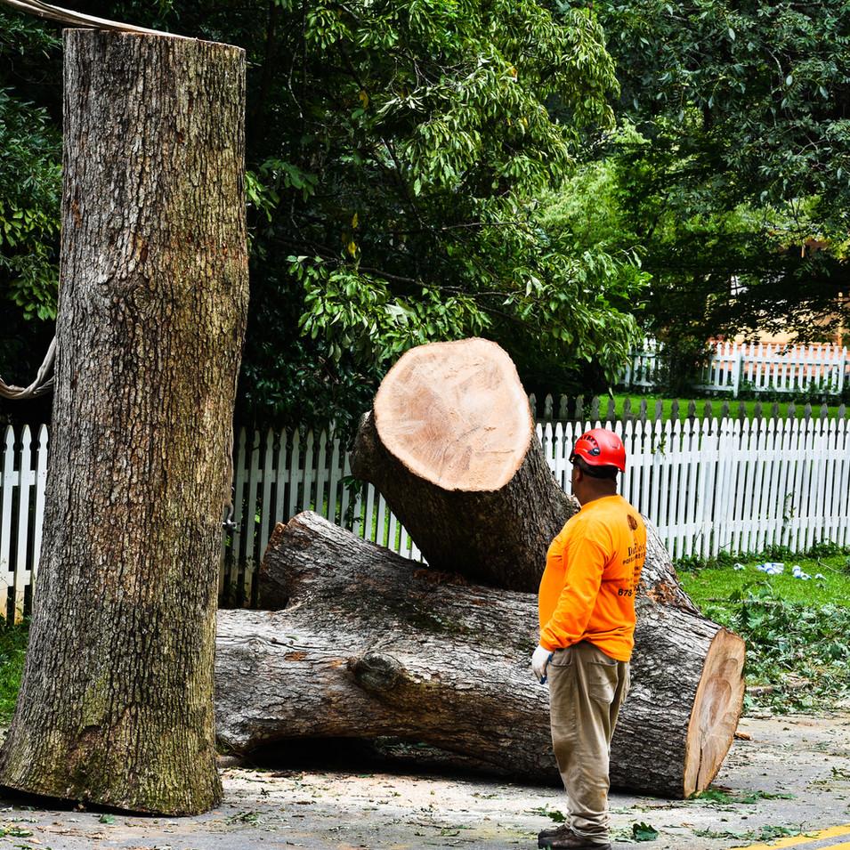 DTS tree stumps