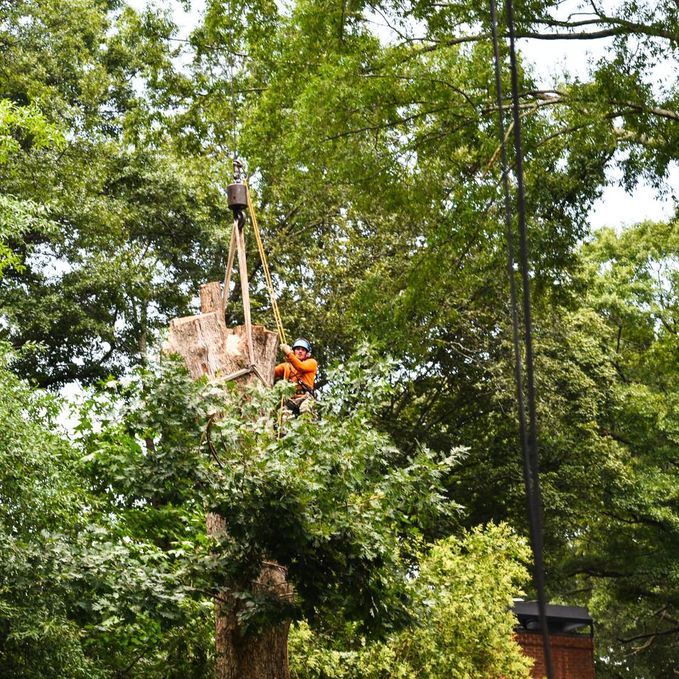 Arborist in the sky