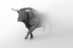 Bull in Mist.png