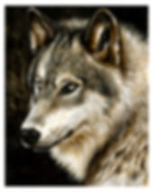 pet portrait wolf for website.jpg