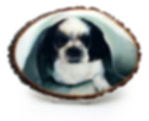 chari dog with resin copy.jpg