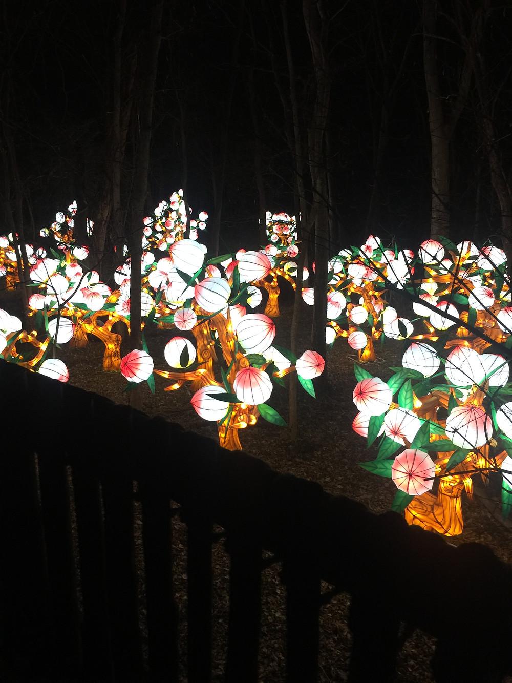 Chinese lantern peach trees