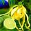 9 Senses Ylang-ylang and lime deodorant, underarm deodorant, Magnesium deodorant