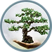 bonsai-circle-border_edited.png