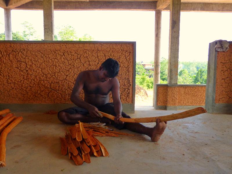 harvest of the cinnamon