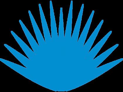 pnghut_tequila-agave-azul-century-plant-