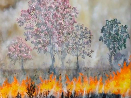 A destruição do bioma pantanal> Elenice Faria