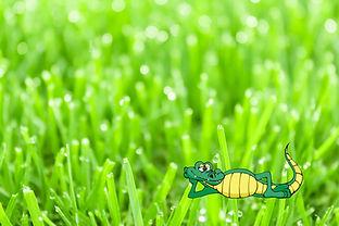 Beautiful w Gator.jpg