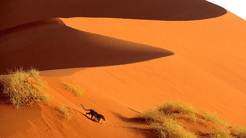 desert crossing namibia sand dunes afric